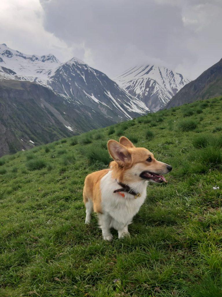 ANDVOL TARA REID на грузинских просторах