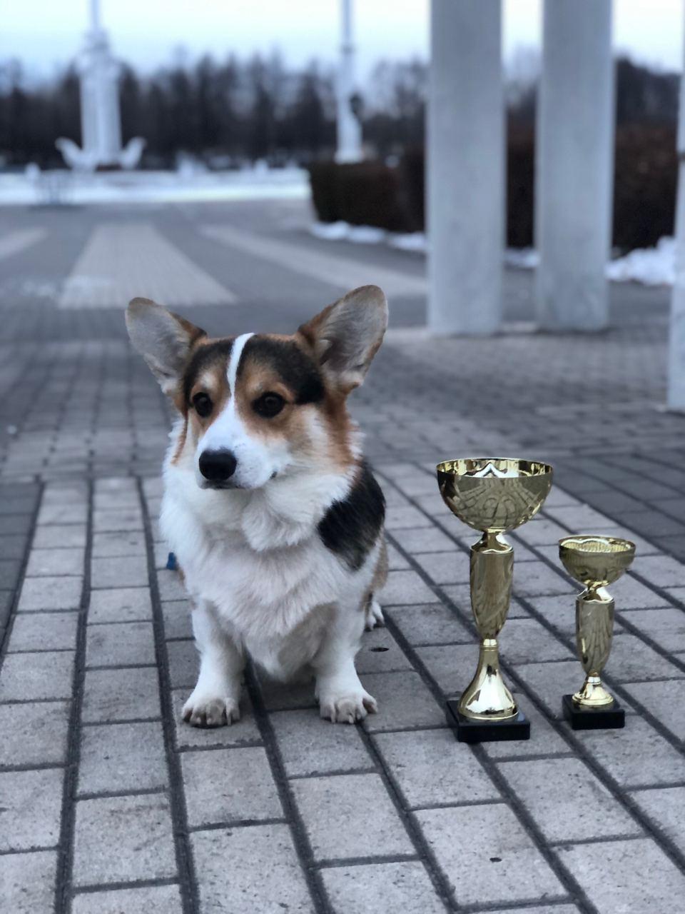 ZELENAYA DOLINA MERCURY WINNER – Чемпион России и Чемпион РКФ